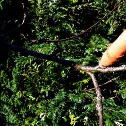 cotton bobbin on rowan tree