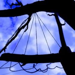 blue sky with five threads on rowan tree
